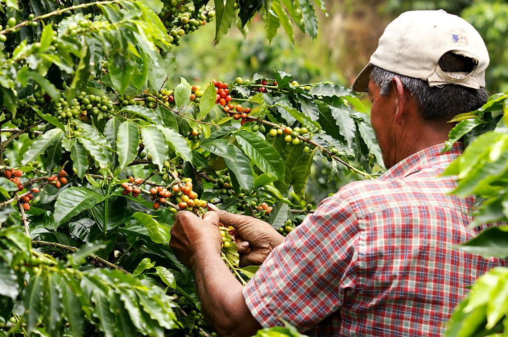 Ruta del Café Jamao, Repubblica Dominicana