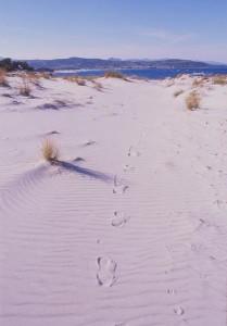 dune di Capo Comino