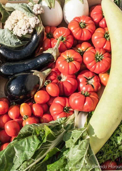 verdura raccolta