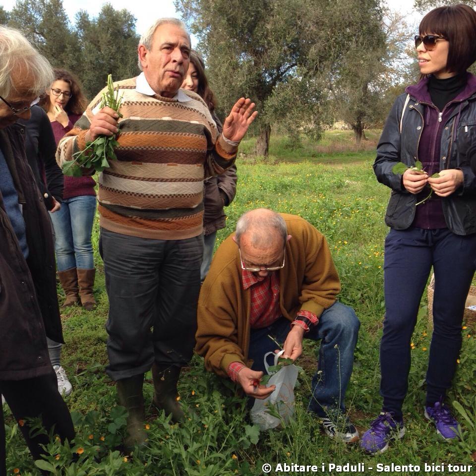 Alla scoperta delle erbe spontanee