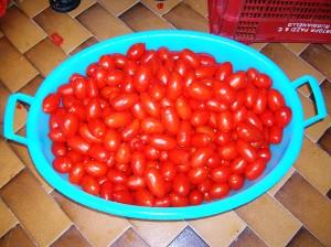 Pomodori per la salsa