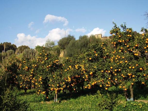 Aranci nel Giardino (www.corriere.it)