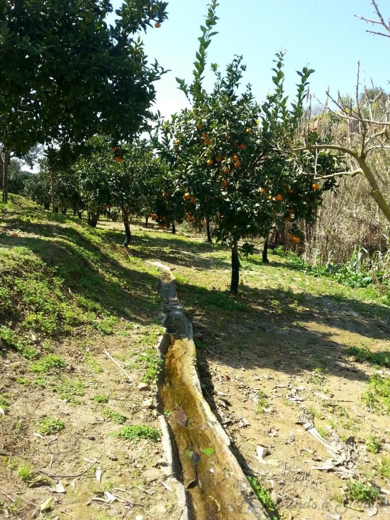 I canali per l'irrigazione attraversano il Giardino da un'estremità all'altra (foto da descobrindoasicilia.com)