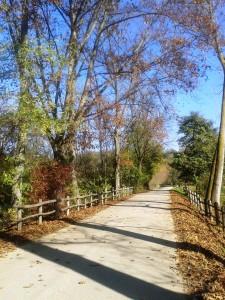 Parco Regionale della Mandria