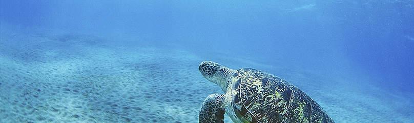 Photo credits WWF