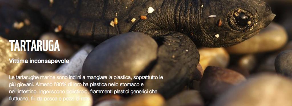 Photo credits mediterraneo.wwf.it dd
