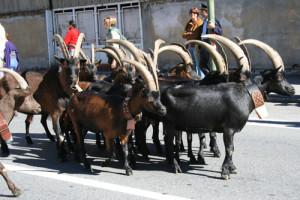 Altra immagine della Désarpa - www.ruralpini.it