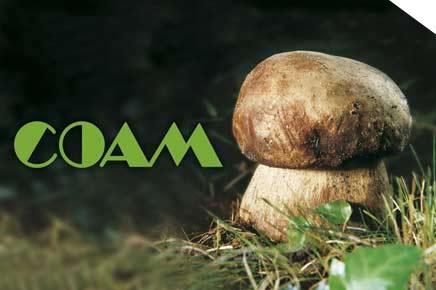 coam-funghi-porcini