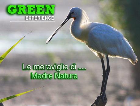 Vacanze nella natura