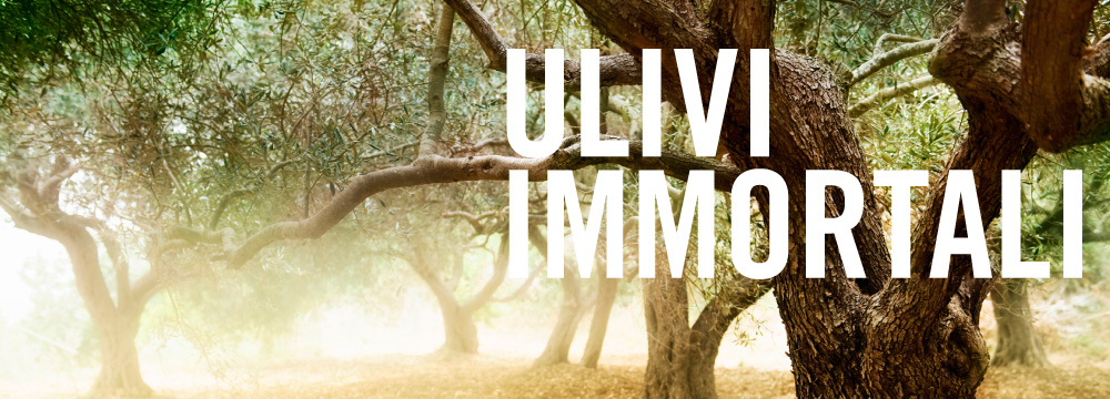 ulivi-immortali