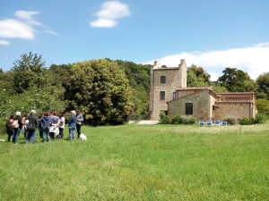 erbe spontanee armaiolo taste in tuscany